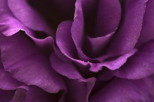 Çiçek Fotoğrafı Çekim Teknikleri