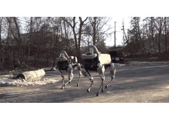 Robot Köpek Gerçeği ile Karşılaşınca!