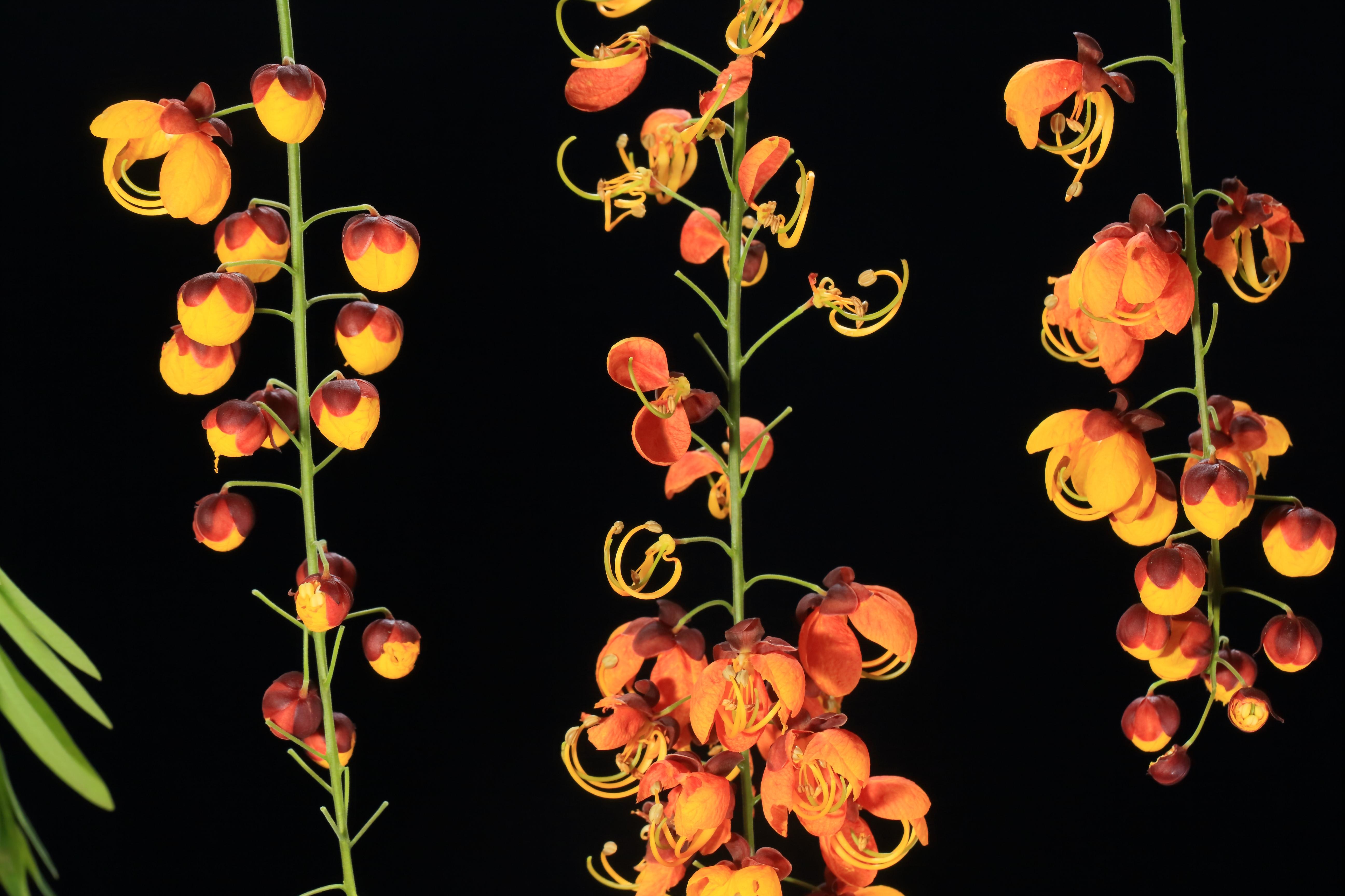 Çiçek Fotoğrafçılığı
