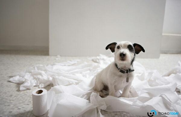 köpekler koronavirüs hastalarını
