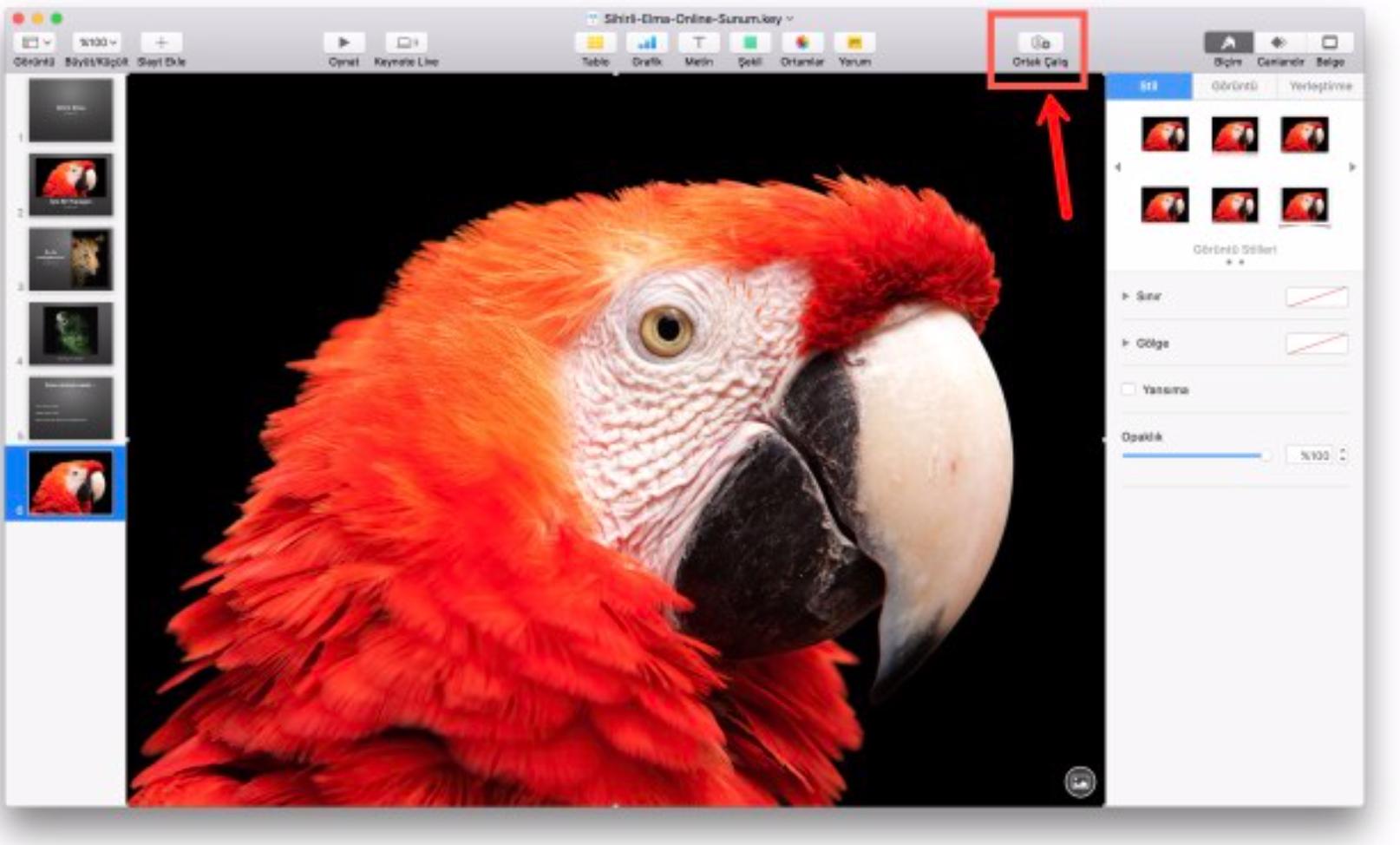 Mac'te Keynote Sunumunu Web Sitesine Ekleme